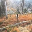 10月のシャスタの大自然からのメッセージ、春セドナツアー
