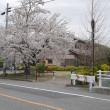 郡山市桑野への道すがら、桜…