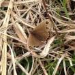 山へ蝶探しに行ってきました。
