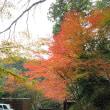 槇尾山西明寺 11月12日(3)