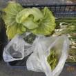 今日の収穫 キャベツ ワケギ ブロッコリー ミツバ