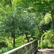 石神井公園の数本の樹木に僅かな秋色が 其の4