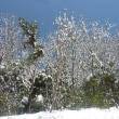 北陸あわら温泉、大雪の1泊2日旅行。