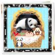 パンダとお遊び~