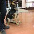 枝光地域で防犯パトロールをしました。警戒犬のエールも一緒でした。