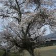 やっと春爛漫!