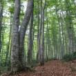ぶな林まで
