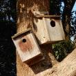 鳥の世界も空き家が多いか・・・