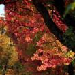 金沢市香林坊を彩るアメリカ楓