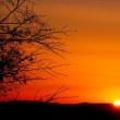 冬茜の夕焼け散歩