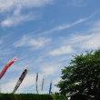 まもなく5月。いよいよ鯉のぼりの季節ですね。(Photo No.14317)
