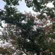 散歩で秋を感じる!