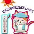 7/13 ひるごはん 五目ずし
