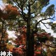 書写山円教寺で紅葉狩り(^^♪