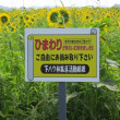 埼玉県川島町 ひまわり畑 2018年7月16日