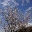 🍒の花と青空
