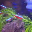 熱帯魚サバイバル その6 ~ミナミヌマエビ 5匹追加、水草追加~