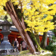 バスツアーで奈良に行ってきました