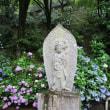 雨に咲くアジサイの長谷寺