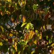 秋の色 2