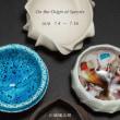 京都伏見 酒の器toyodaさんの企画展