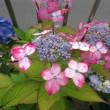 紫陽花 コサージュ