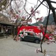 足尾駅と桜