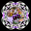 ビオラの花を・・・