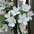 バイカウツギに似た花