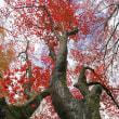 横蔵寺の紅葉 2