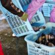 石鯛・波切魚市場