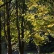 秋の気配 青梅界隈