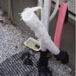 猫13匹虐待殺傷事件の初公判に杉本彩激白!