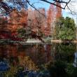 静寂    あなたに感謝し 喜びと 賛美を    ---- 井の頭公園