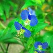 神代植物公園と水生公園の花から