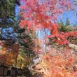 11/15(木)のPACニュース~追分&軽井沢周辺の情報
