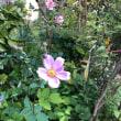 おはぎの季節…もとい 萩の季節