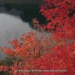 紅葉(奥四万湖)