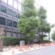 どうか、中央区の皆様、日本橋の街路樹を守って下さい。街路樹伐採の差止めを求める中央区職員措置請求書(案)