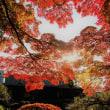 秋彩の煌き。