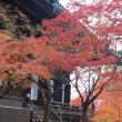紅葉狩り@京都