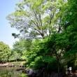 散歩写真10枚 4月20日は清々しい散歩日和〜