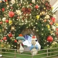 今年もクリスマスツリー