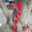 菊池は紅葉と足湯がよろし