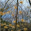 小石川植物園を散歩