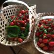 収穫ミニトマト △ らんち