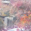 梅の花の蕾が大きくなってきた、もうすぐ咲くだろうと期待していたのに。一日で消えていた。こんなことが起きるなんて!!
