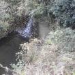 水戸のわき水(7)