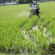 来年の米作りの準備