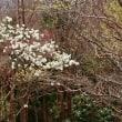 今年の春は早い!